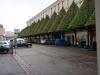 Le Havre, Lollipop Bäume